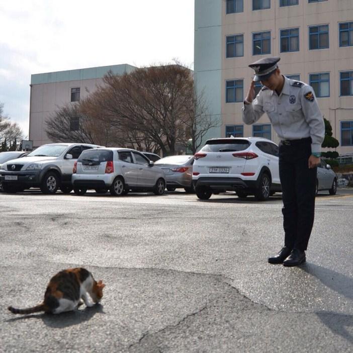 猫に敬礼するお巡りさん