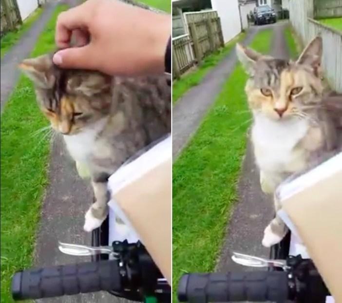 郵便配達員にナデナデされて幸せそうな猫
