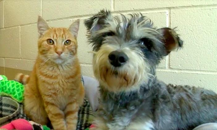 見つめる猫と犬