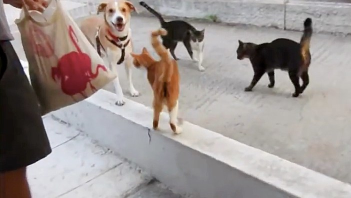 楽しそうな犬と猫