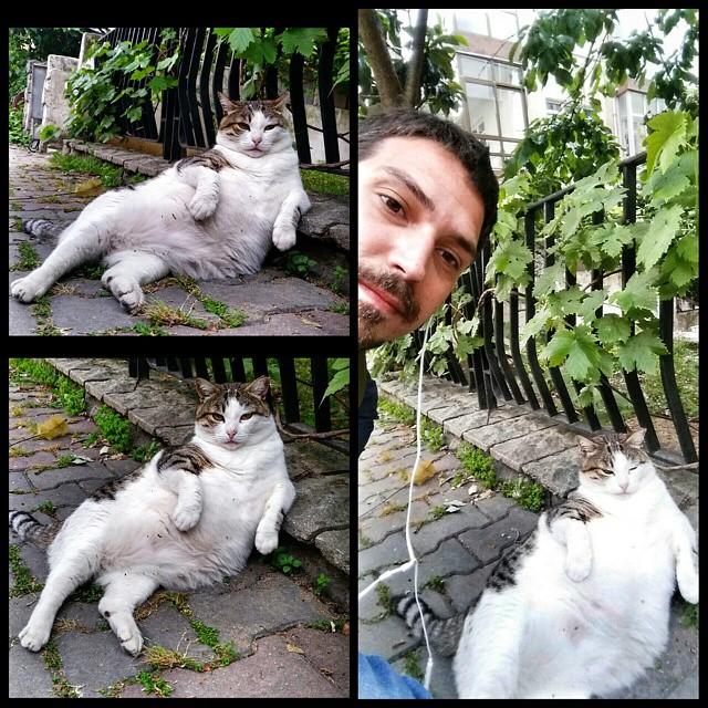 男性と肘をつく猫