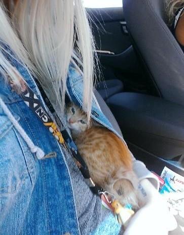 ジャケットの中に隠れる子猫