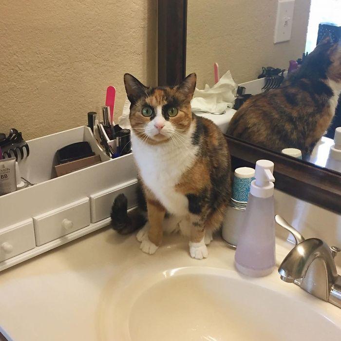 待機する眉毛猫
