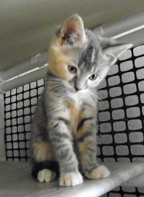 うつむく子猫