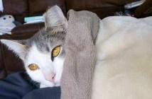 家に住み始めた猫