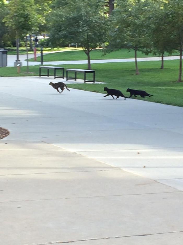 キャンパスには猫がいっぱい