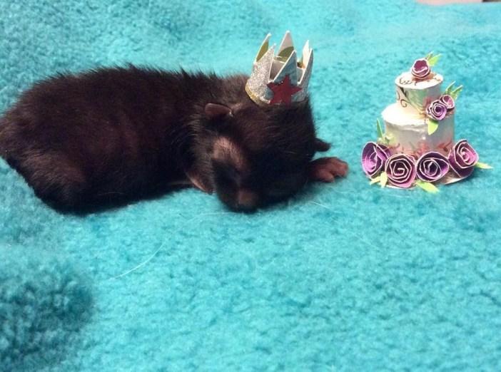 誕生日子猫