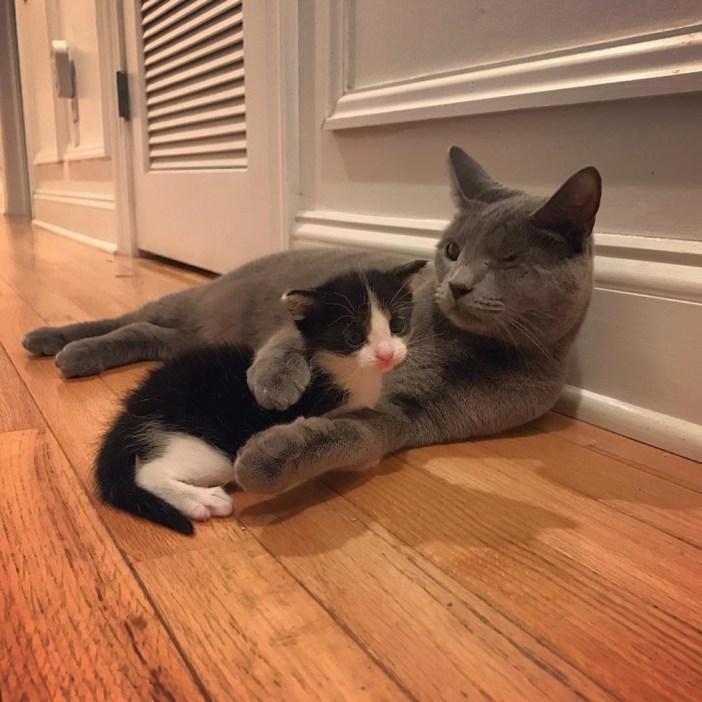 猫に抱きしめられる子猫