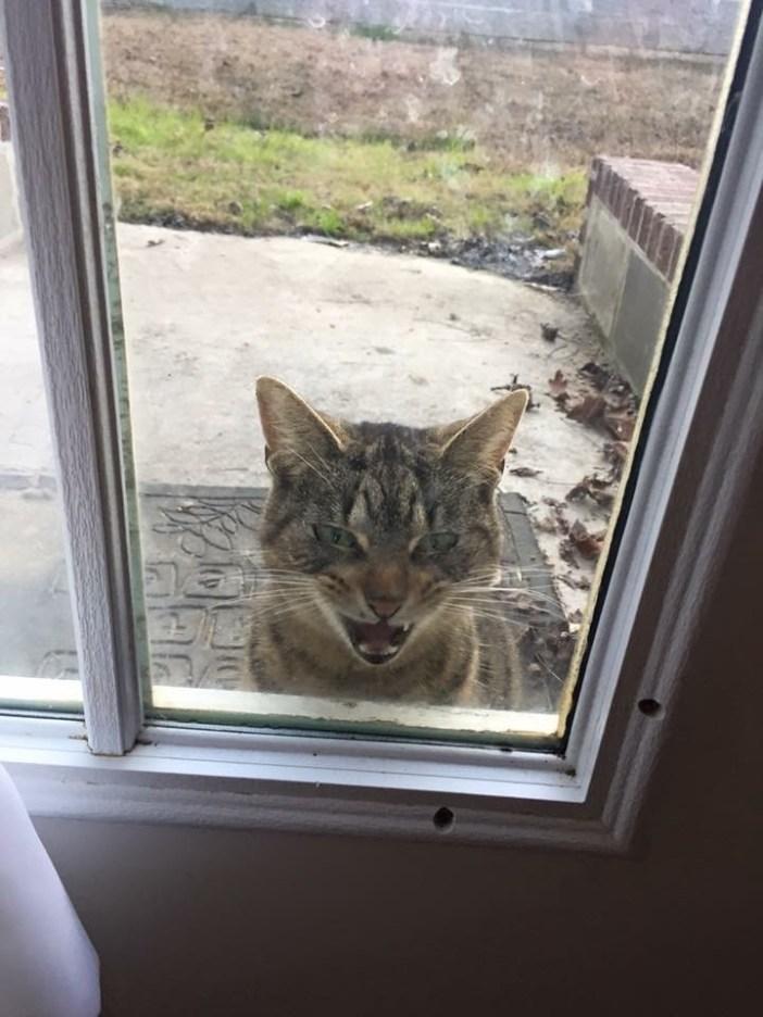 玄関から覗く猫