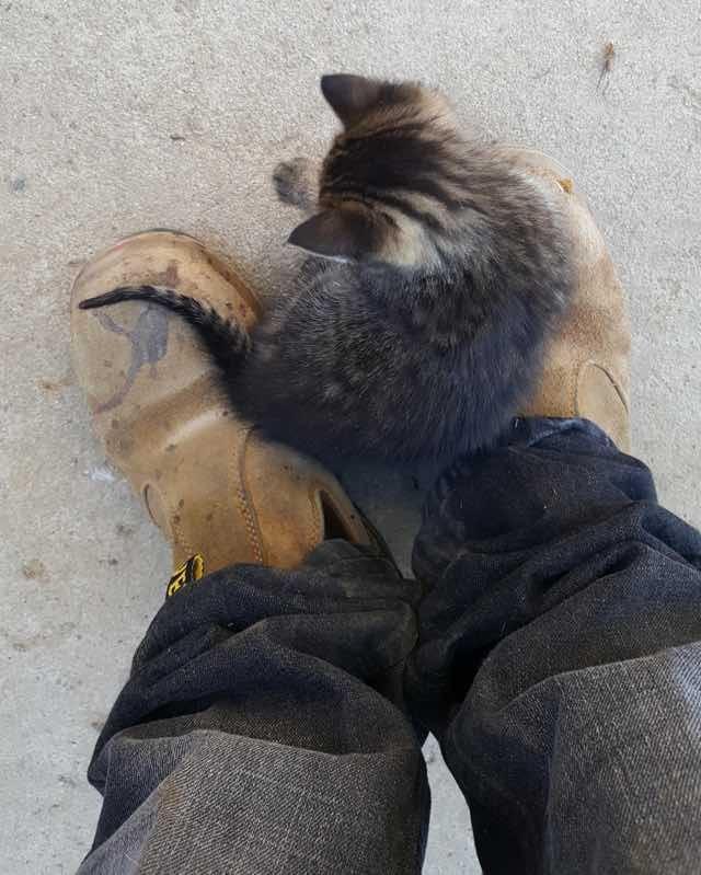 足に乗る子猫
