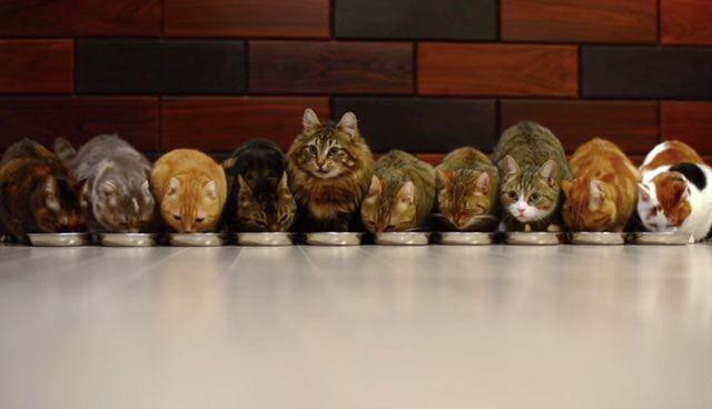みんなでご飯を食べる猫