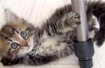 モフモフ子猫