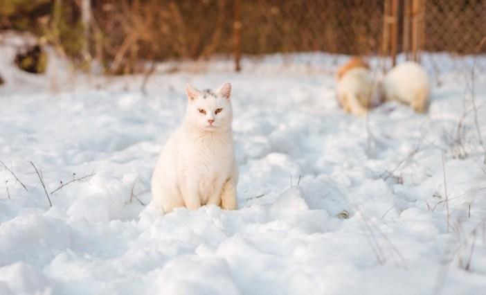 雪の上の猫