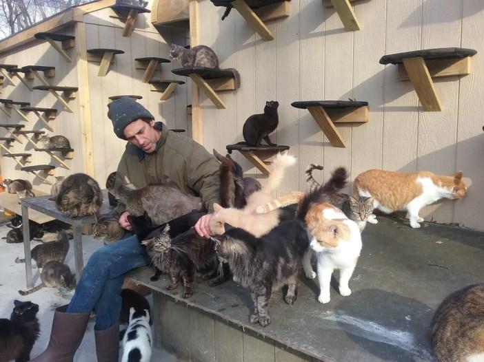 300匹の野良猫の世話をする男性