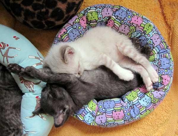 ベッドでお昼寝