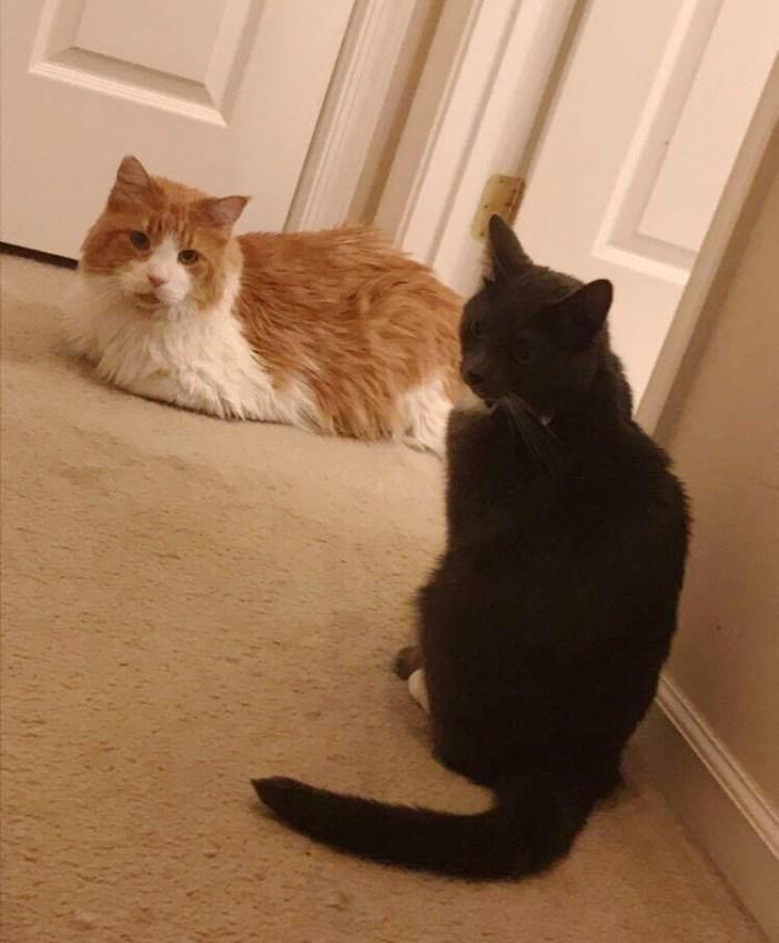 見つめ合う猫達