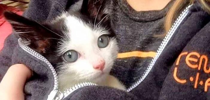 元気に生きる子猫