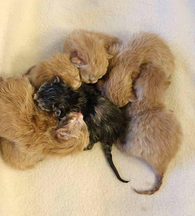 固まる子猫達