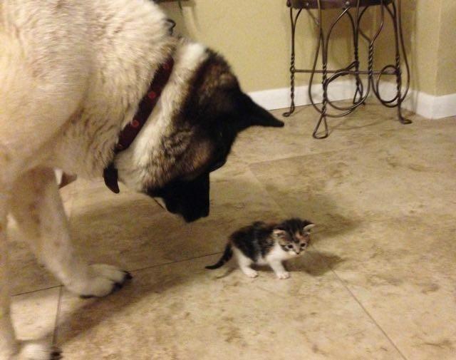 子猫を見る犬