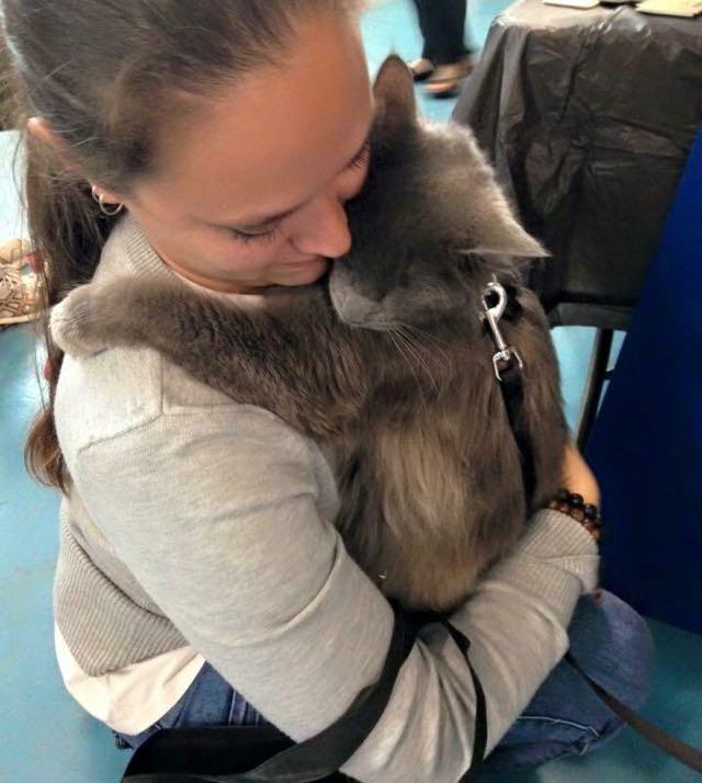 飼い主さんに抱きつく猫