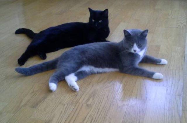 同じポールの猫