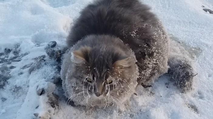凍りついた猫