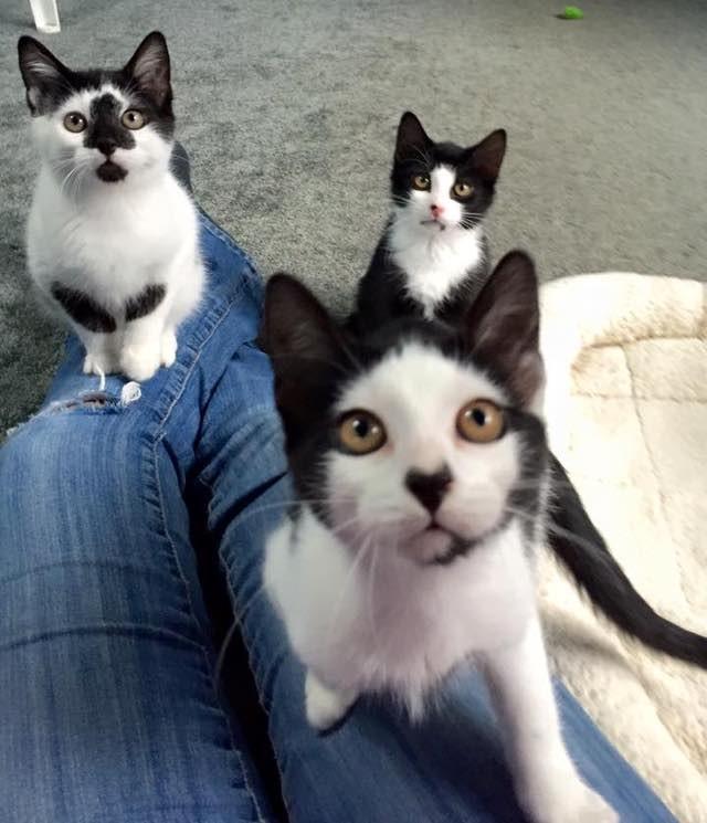 興味ありな子猫達