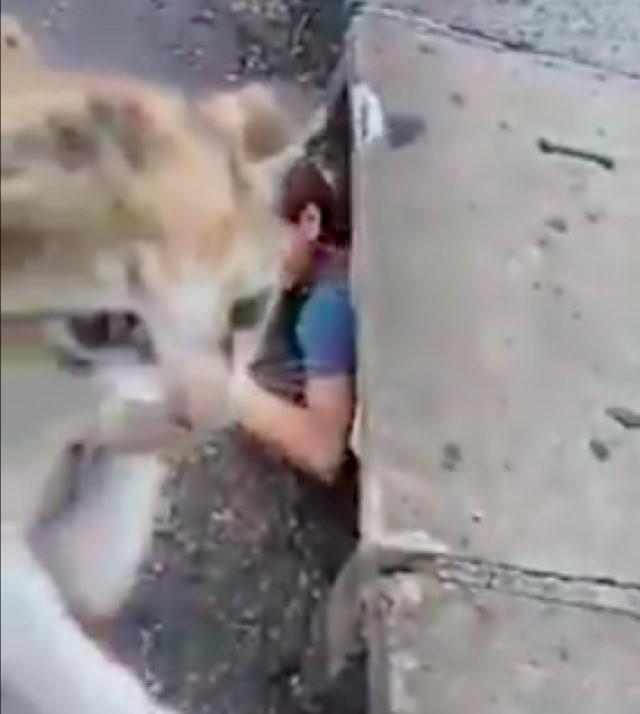 救い出された子猫