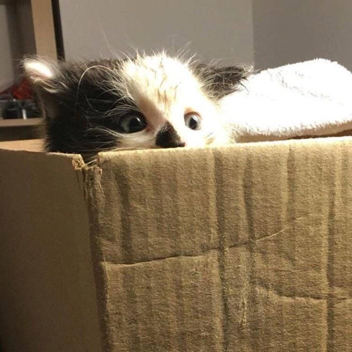 箱から覗く子猫