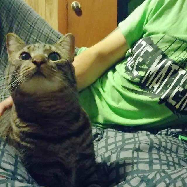3度目の正直猫