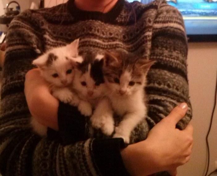抱っこされる子猫たち