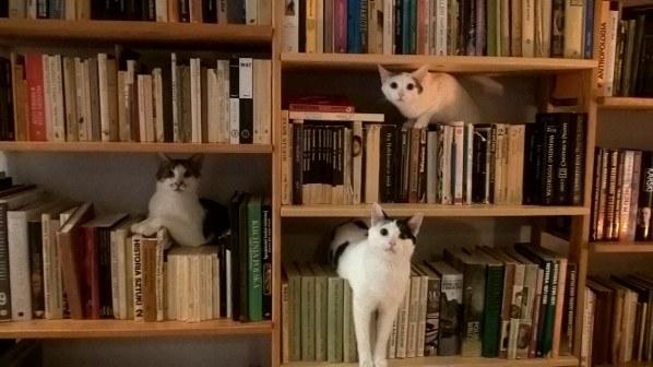 棚で遊ぶ子猫たち