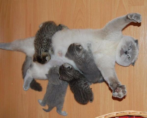 ミルクをあげる母猫