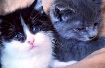 仲良しな子猫達