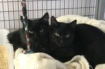 仲良くなった2匹の猫