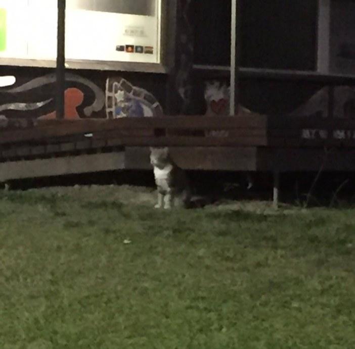 家に現れた猫