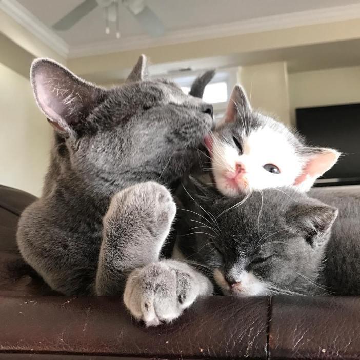舐められる子猫