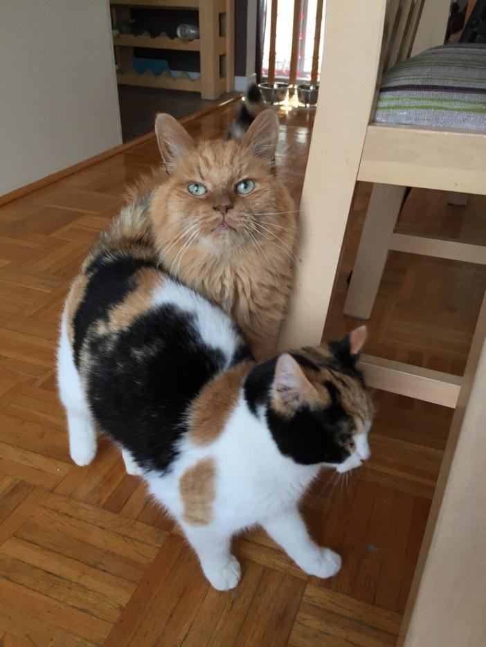 家で暮らす猫