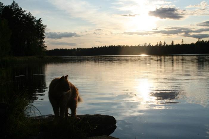 自然を楽しむ猫