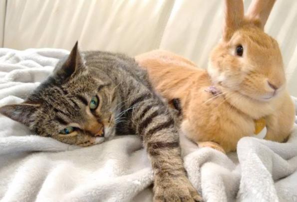 幸せそうな猫とウサギ