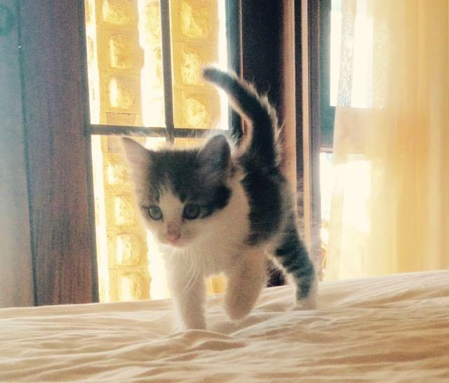 ベッドを歩く子猫