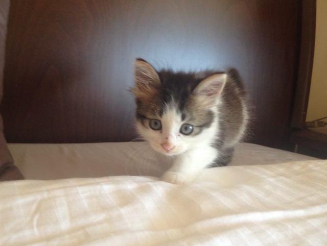 ベッド子猫