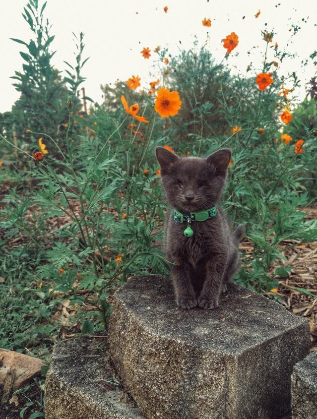 お花畑の前の子猫