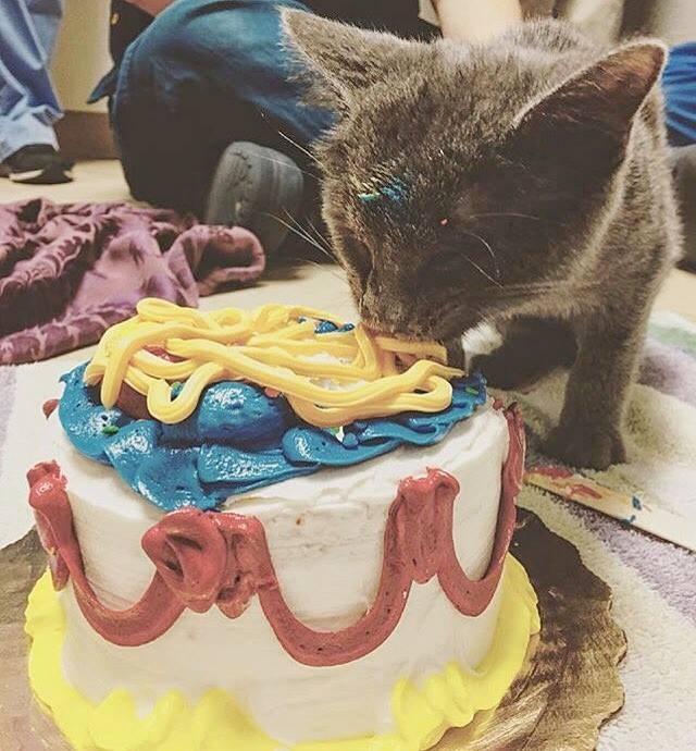 ケーキを食べる子猫