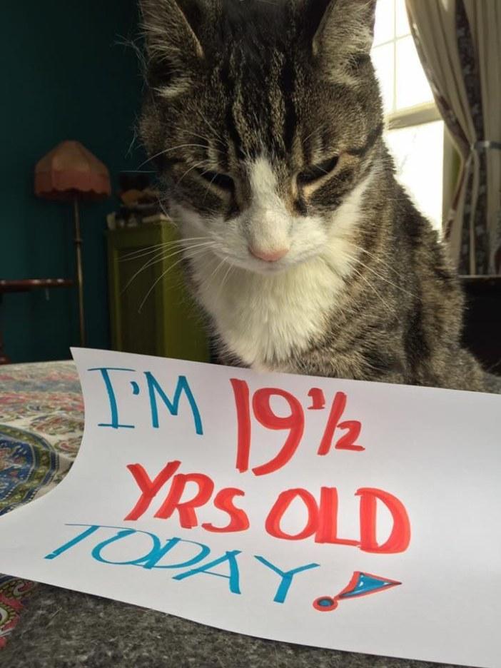 19歳の猫