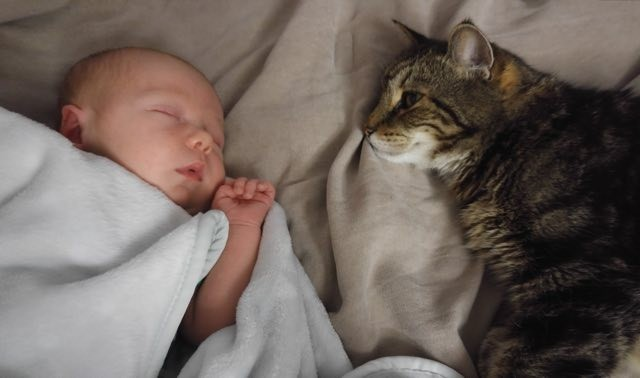 赤ちゃんを見つめる猫