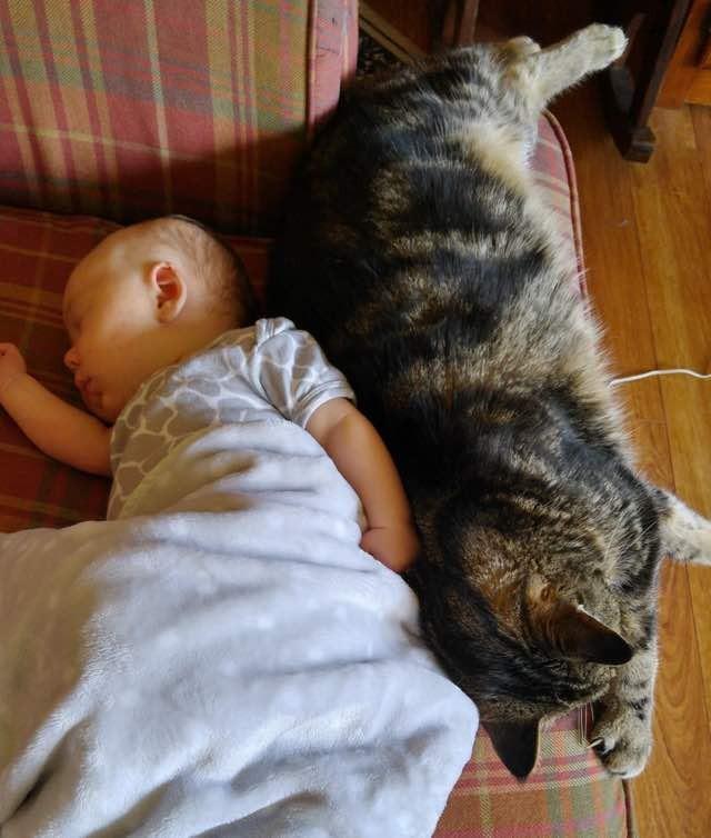 赤ちゃんと一緒に眠る猫