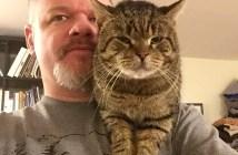 肩を支配する猫