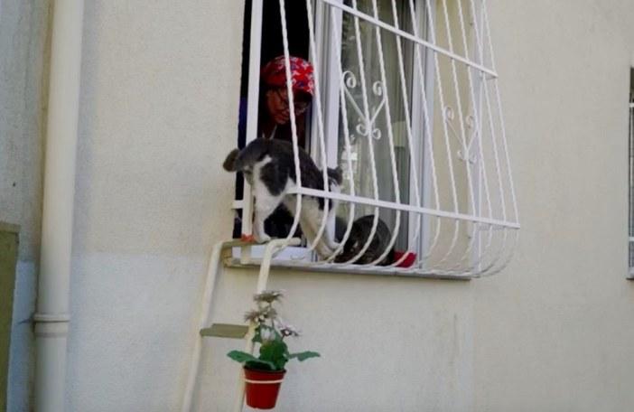 はしごを登った猫