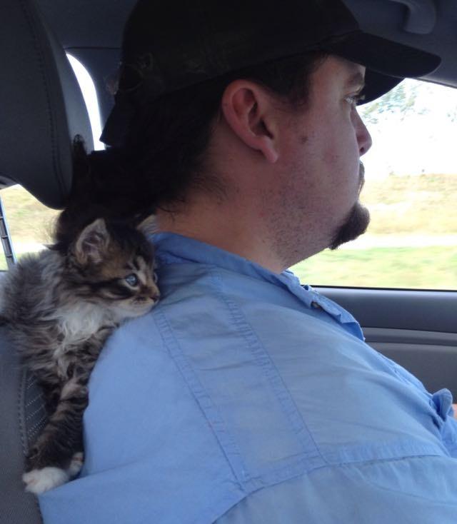 肩の上の猫